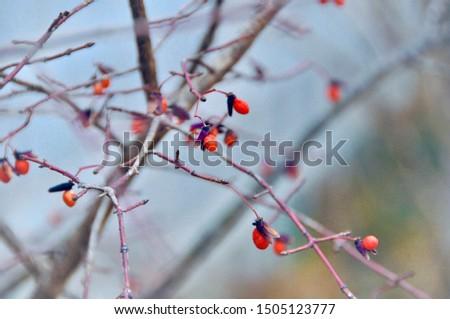 Birch trees in winter season #1505123777