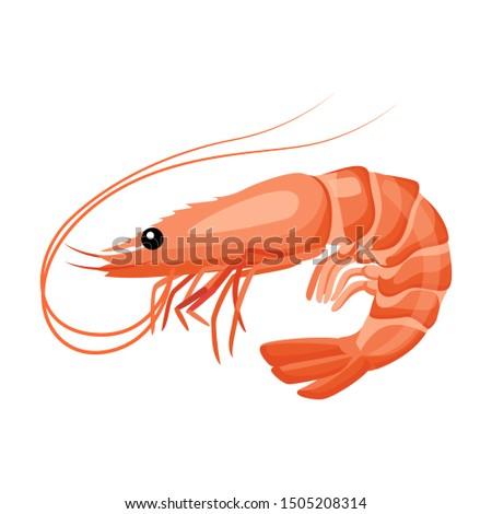 Shrimp icon in flat style, fresh sea food. Isolated on white background. Vector illustration. #1505208314