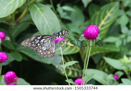 Close-up picture, butterfly, blurry background, green leaves