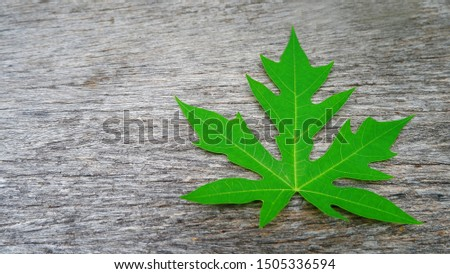 papaya leaf on wooden background ,nature background with papaya leaf #1505336594