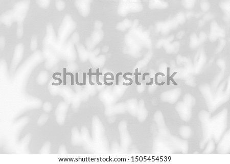 Abstract leaves shadow and light blurred background with light bokeh, natural leaves tree branch on white wall texture,  wallpaper, black and white, monochrome, nature art shadow on wall #1505454539