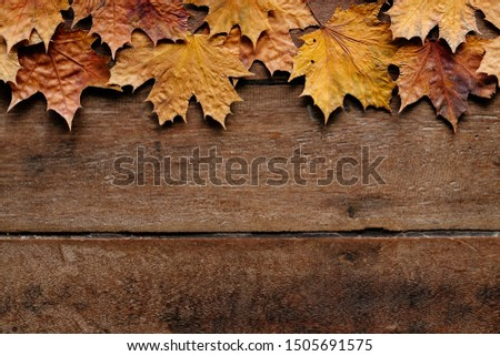 Autumn leaves on wooden background with copy space. Wallpaper for September 1. #1505691575