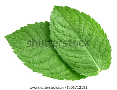 Mint leaves isolated on white background. Mint clipping path. Food photography #1505712131