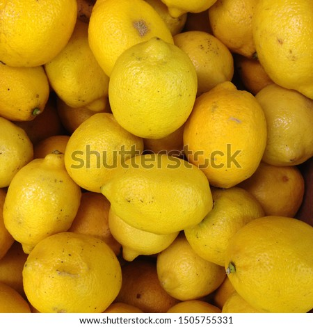 Macro Photo Of A Ripe Juicy Lemon Fruit. Texture yellow citrus fruit lemon. Many yellow sour lemons lie on the shelf. #1505755331