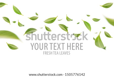 Flying whirl green leaves in the air, Healthy products by organic natural ingredients concept, Empty space in studio shot isolated on white background long banner #1505776142