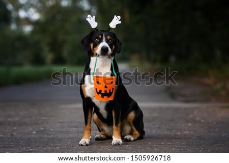 dog portrait holding a basket for Halloween #1505926718