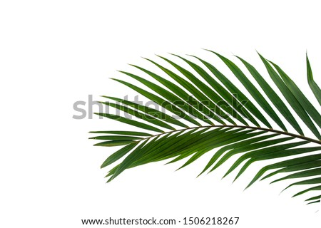 Beautiful green coconut leaf isolated on white background with clipping path for design elements, tropical leaf, summer background #1506218267