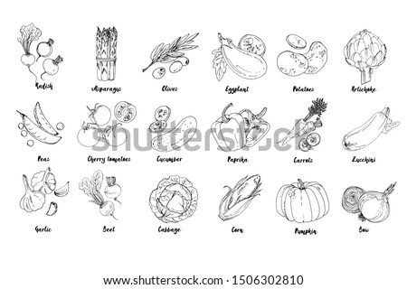 Set of drawn colored vegetables. Fresh harvest. Farm products. Pumpkin, asparagus, olives, peas, cherry tomatoes, cucumber, garlic, beets, cabbage, Eggplant, potatoes, artichokes, peppers, carrots #1506302810