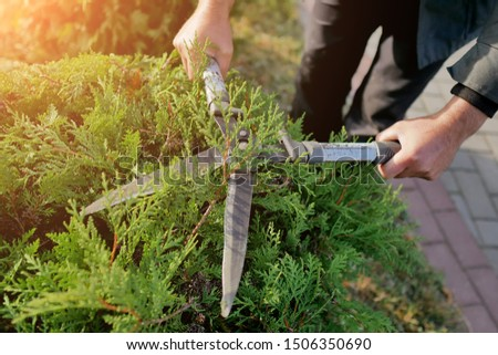 autumn pruning conifer shrubs garden shears Royalty-Free Stock Photo #1506350690