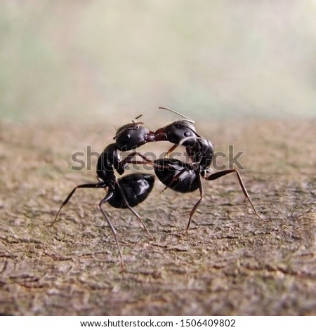 "Ants exchange greetings. They are ""kiss"" and taste one another, exchanging chemicals that identify themselves as being part of the same colony"