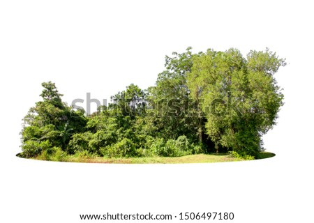 Group of tree isolated on white #1506497180