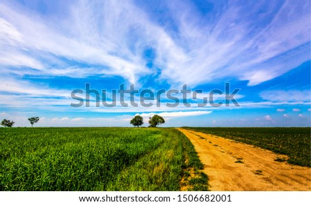 Summer field road landscape. Rural road in summer. Country road horizon landscape. Summer rural road view #1506682001