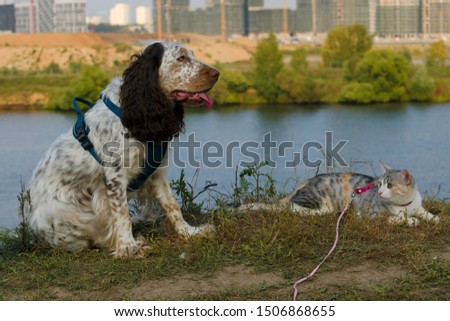 Beautiful young dog of English Cocker Spaniel spaniel breed and tabby colored tricolor cat lying in summer park against river background.  #1506868655