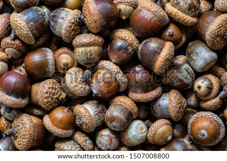 Background with autumn acorns and leaves closeup. Acorns macro. Oak acorns.Brown autumn acorns on the table. Autumn backdrop. Top view from above. #1507008800