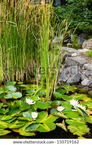 A water garden pond with white water lilies blooming #150719162
