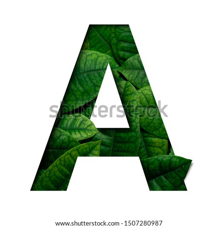 Leafs font A made of Real alive leafs with Precious paper cut shape of font. Leafs font. #1507280987