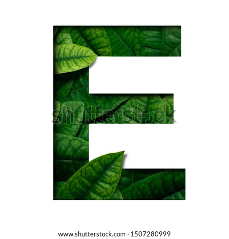 Leafs font E made of Real alive leafs with Precious paper cut shape of font. Leafs font. #1507280999