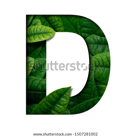 Leafs font D made of Real alive leafs with Precious paper cut shape of font. Leafs font. #1507281002
