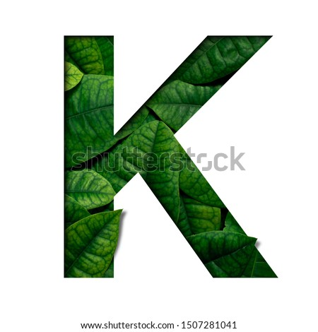 Leafs font K made of Real alive leafs with Precious paper cut shape of font. Leafs font. #1507281041