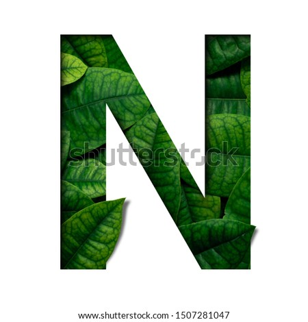 Leafs font N made of Real alive leafs with Precious paper cut shape of font. Leafs font. #1507281047
