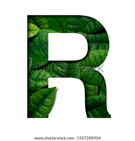 Leafs font R made of Real alive leafs with Precious paper cut shape of font. Leafs font. #1507288904