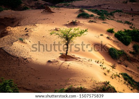 Sun shining a spotlight over resilient tree growing in a little sand dune in a shadowy ravine on a sahelian plateau with refresehd vegetation during summer rainy season outside Niamey capital of Niger #1507575839