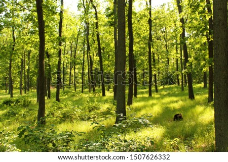 Green, grassy forest in Czech Republic #1507626332
