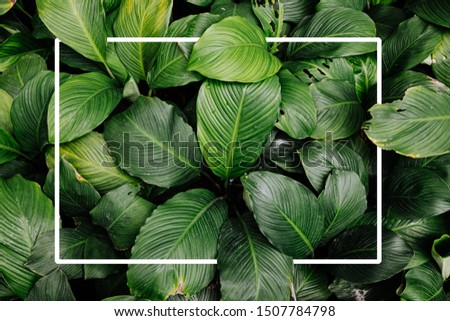 Frame tropical leaf texture green leaves Background, foliage nature #1507784798