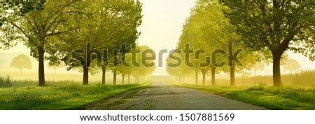 Avenue of Linden Trees touched by the morning sun, Tree Lined Road through beautiful green Spring Landscape Royalty-Free Stock Photo #1507881569
