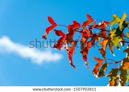 Autumn landscape, Autumn leaves with the blue sky background, Yellow, red and green bright leaves and branches, fall themes #1507903811