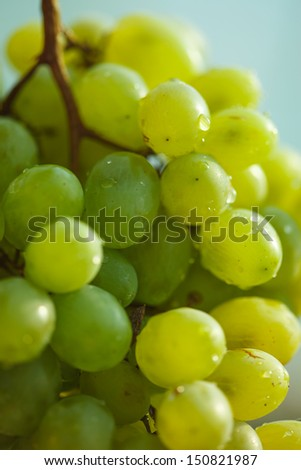 Green grape with drops of water. Macro image. #150821987