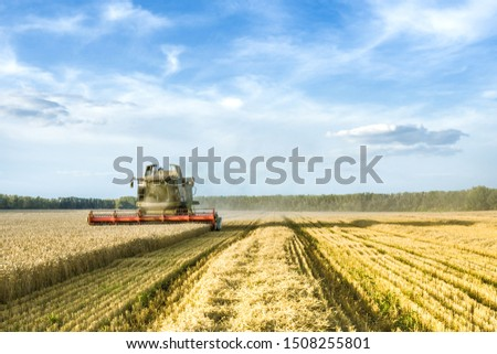 Against the backdrop of a sunny summer day and blue sky with clouds. Combine harvester harvesting ripe golden wheat on the field. The image of the agricultural industry #1508255801