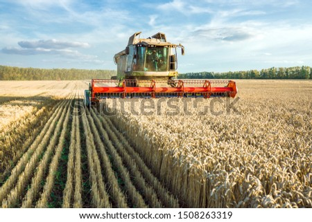 Against the backdrop of a sunny summer day and blue sky with clouds. Combine harvester harvesting ripe golden wheat on the field. The image of the agricultural industry #1508263319