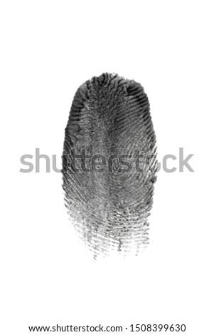 fingerprint pattern isolated on white #1508399630