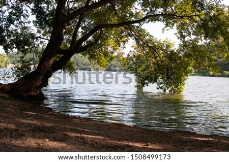 This is a beautiful picture of a big tree and a lake. #1508499173