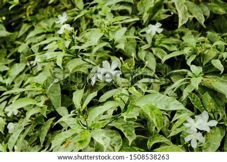 beautiful green leaf closeup background #1508538263