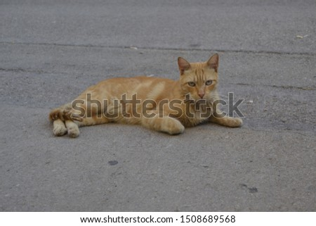 Stray puss enjoying the shade in a parking lot. #1508689568