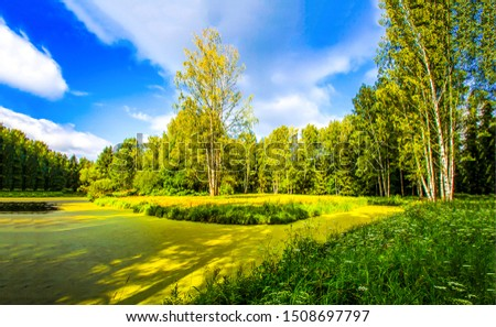 Green swamp duckweed in sunny day. Swamp duckweed forest river view. Swamp duckweed green view. Green swamp duckweed forest landscape