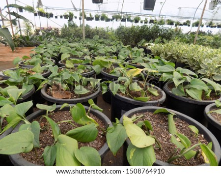 indoor plant for indoor garden, indoor house decorations and natural art #1508764910