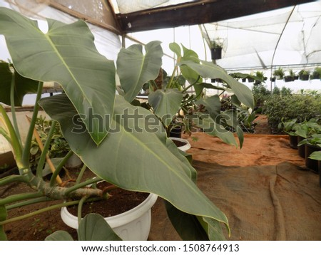 indoor plant for indoor garden, indoor house decorations and natural art #1508764913