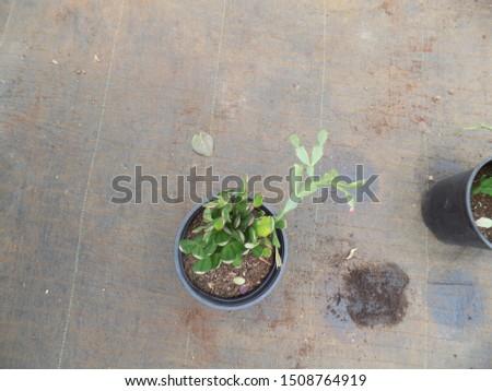 indoor plant for indoor garden, indoor house decorations and natural art #1508764919