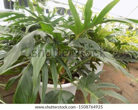 indoor plant for indoor garden, indoor house decorations and natural art #1508764925