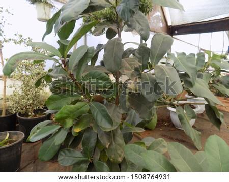 indoor plant for indoor garden, indoor house decorations and natural art #1508764931