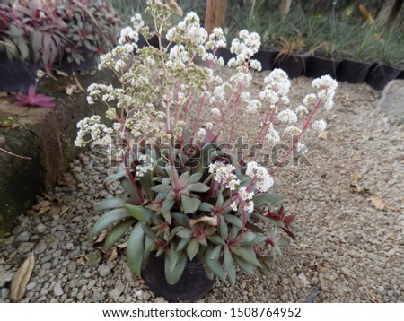 indoor plant for indoor garden, indoor house decorations and natural art #1508764952