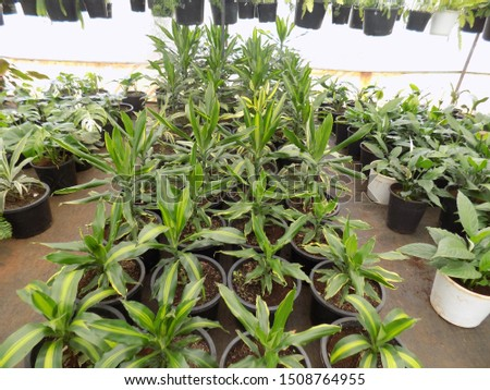 indoor plant for indoor garden, indoor house decorations and natural art #1508764955