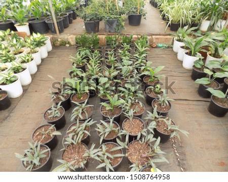 indoor plant for indoor garden, indoor house decorations and natural art #1508764958