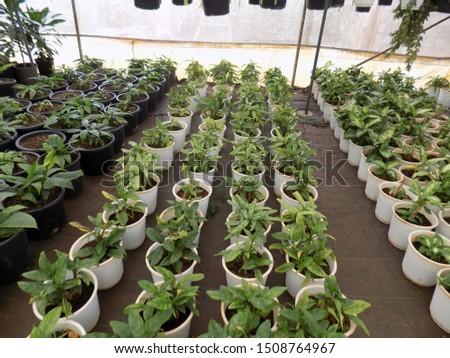 indoor plant for indoor garden, indoor house decorations and natural art #1508764967