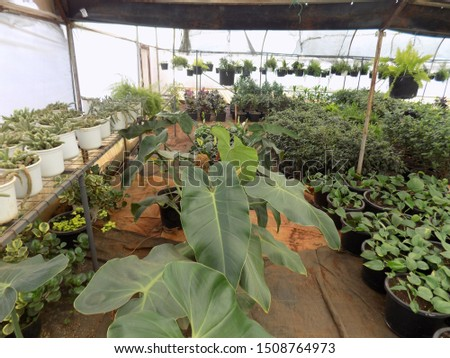 indoor plant for indoor garden, indoor house decorations and natural art #1508764973
