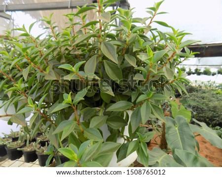 indoor plant for indoor garden, indoor house decorations and natural art #1508765012