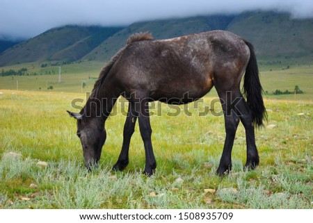 One horse walks in the field in mountains with clouds.  #1508935709